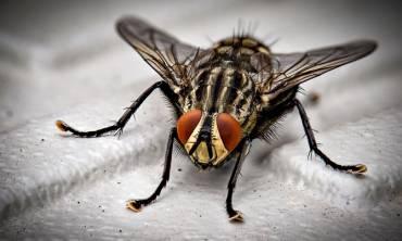Pest Inspections & Surveys